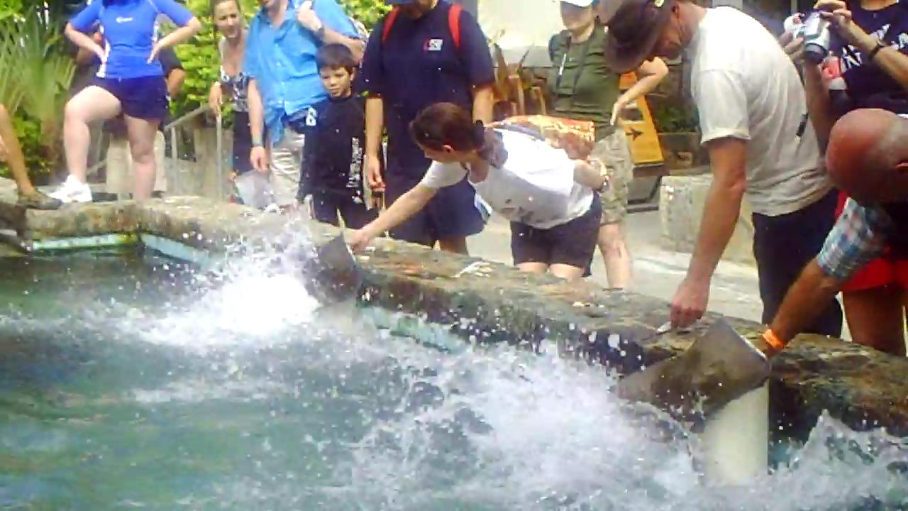 feeding and petting sting rays